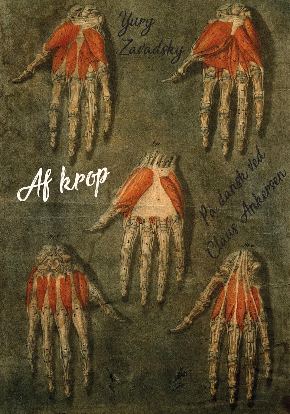 Af-krop1